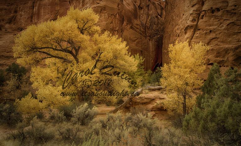 Long slot canyon entrance, by Carol Quinn. ID _1CQ6186