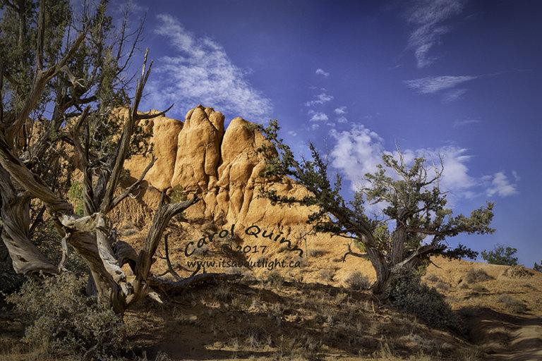 Trees Sentinel Trail, by Carol Quinn. ID _1CQ7330-34 rev 1e