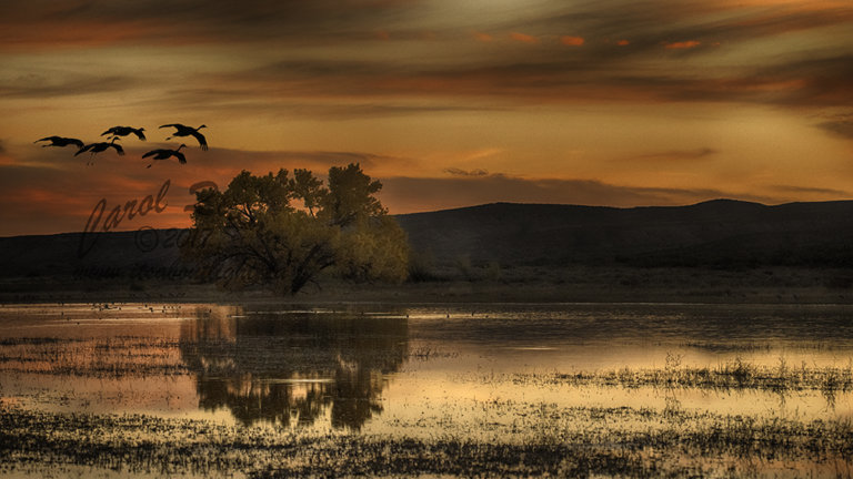 Tree in pond at sunset with cranes, by Carol Quinn. IDs 2CQ7090 and 92 rev 1c, and _2CQ7028