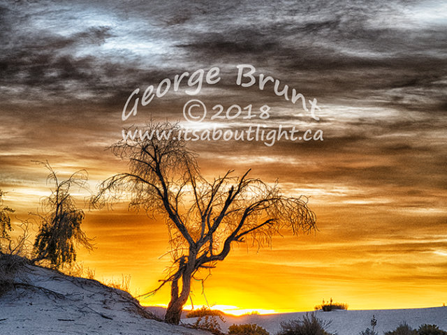 Tree in Whitesand, by George Brunt. ID 2gb0625-27 rev 1c