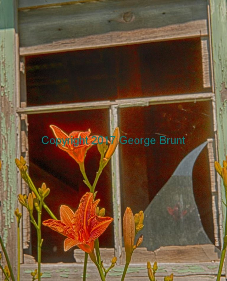 Day lily window, by George Brunt. ID 7GB_9345