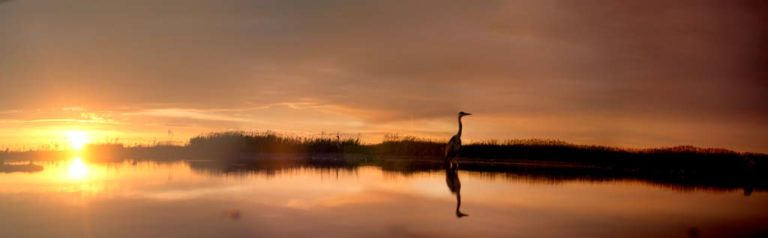 Lake at sunrise with heron, by George Brunt. ID 4gb1962-65