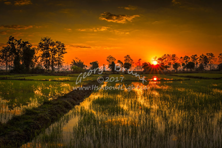 Chiang Rai rice field, by George Brunt. ID 5gb5945-49